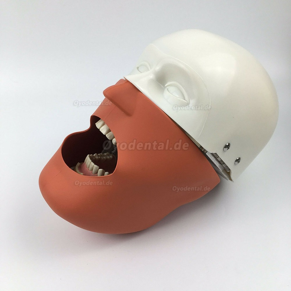 Jingle JG-C1 Dental Surgery Practice Model Head Clamp Type Simulation Phantom Head
